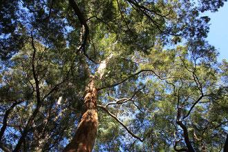 Camping unter Bäumen