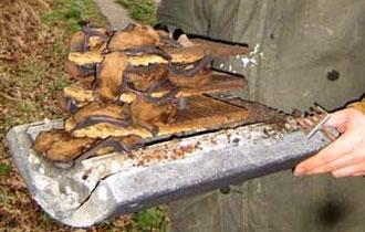 """Überraschung bei der Kontrolle eines Fledermaus-Großraum-Kastens in unserem Waldgebiet """"Hölle"""": Insgesamt über 70 Exemplare der Fledermausart """"Großer Abendsegler"""" haben den Kasten als Winterquartier bezogen!"""