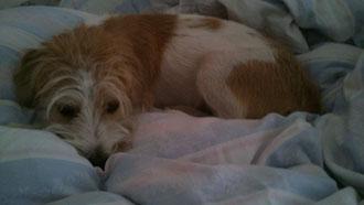 Ich erobere das Bett - Hundis an die Macht!