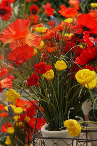 coquelicots-artificiels