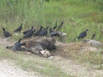 Der Tod am Straßenrand