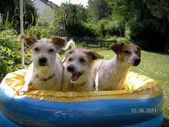 Baden macht Spaß! Banja, Bayuna und Amy im Pool!