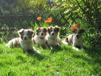 Ein lauschiges Plätzchen! Aysha, Anouk, Andra und Amy im Garten