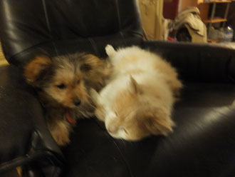 Tobi und Vicaro
