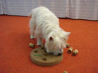 unsere Hunde mit Pringelsdose