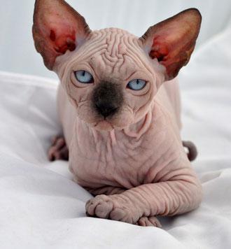tosh.o cat girl