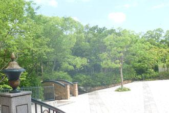 六月☆   力強い緑たちが、たくさんの方を元気付けてくれています♪。   もうすぐ梅雨。。緑たちにとっては、嬉しい時季☆そう思うと、優しいキモチになりますね♪♪