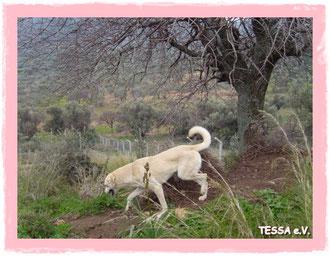 Streunerhilfe Türkei, Nilgün Karsilayan, TESSA e.V., Yenifoça, TESSA e.V., Nilgün Karsilayan, Tierschutz Türkei, Tierhilfe- Foca