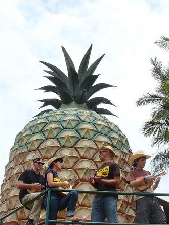 THE BIG PINAPPLE!!