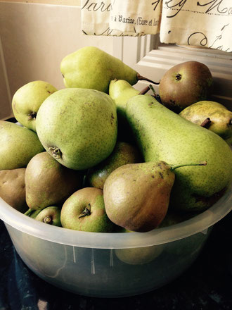 A bowl of fresh picked local pears.
