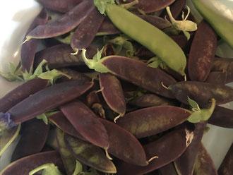 Purple Podded Peas.
