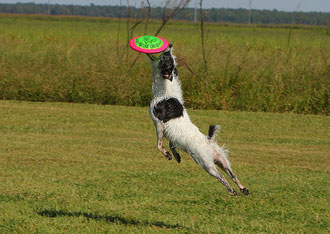 Frisbee, photo Emery_way