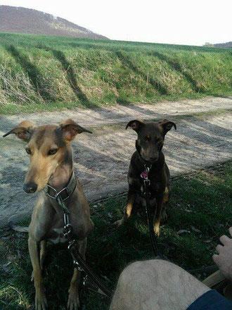 Yavo zog zu seiner Familie und seiner neuen Hundefreundin nach Homberg.
