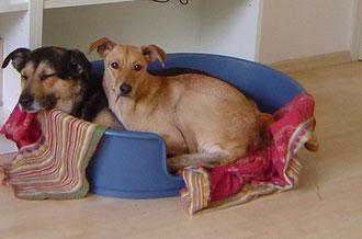 Nica (rechts) darf für immer bei ihrem Bilbo in Hopsten bleiben.