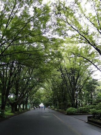 東京学芸大学