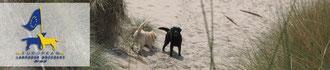 The new European Labrador Breeder List
