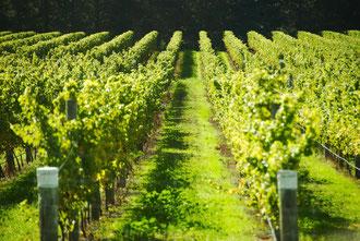 Zeitgeist Wine Tours England