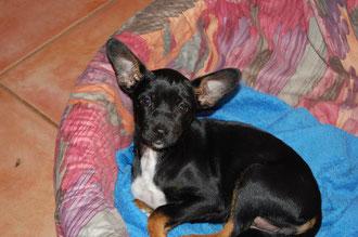 Ich habe die Ohren schön-Urmel Februar 20011