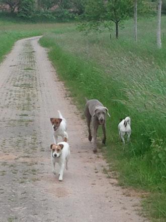 Cora, Drago, Freya & Cassy