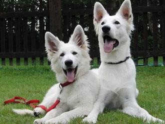 Leona (4 Mon.) und Shameera