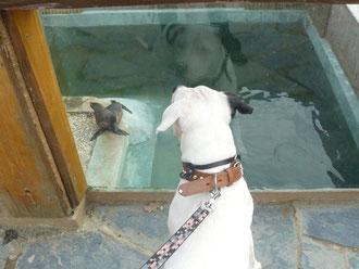 Liam fa amicizia con le foche..!!
