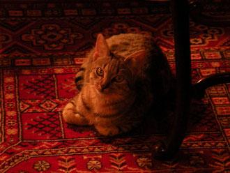 La petite chatte Chouchou