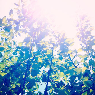 今日はぽかぽか陽気!5月に入り、日に日に新緑が濃くなっていきますね〜。里山カフェオープンまであと少し、わたしたちも元気に準備していきたいと思います^^