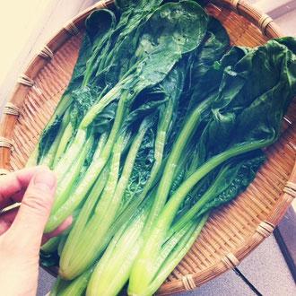 鳴子と岩出山の農家さんからいただいた、元気いっぱいの小松菜たち^^今月のカフェの、ミルクレープになります♬緑鮮やか、味も濃い小松菜です〜。作ってくださっている方々に感謝して、使わせていただきます〜!