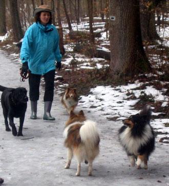 Sheltie-Andrea mit Murphy, Cindy, A.J. und Joschi