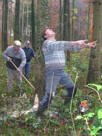 Unser Jubiläumsnarrenbaum wird ausgemesse.............