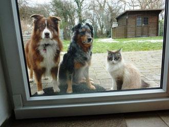 Merlin zu Besuch