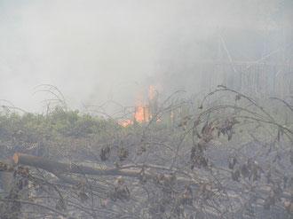 インドネシア中カリマンタンの泥炭湿地の自然発火で燃え出す家