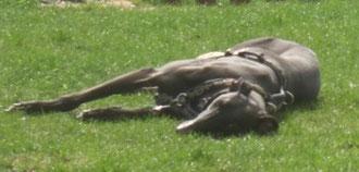 ein schwarzer Prinz gaaanz müde gespielt