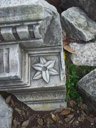 Flores en las ruinas