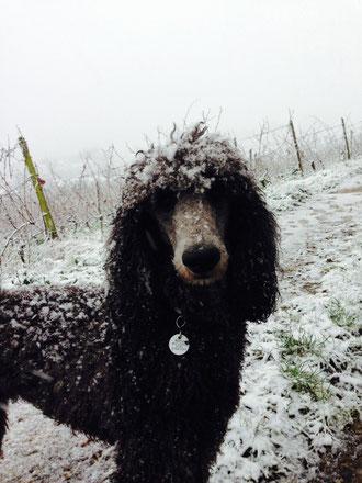 27.12.14 Der Winter ist in den Weinbergen angekommen