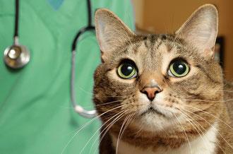 Le regard de ce chat a quelque chose de fascinant