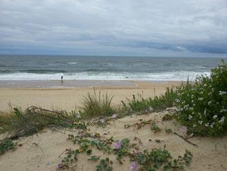 Une plage qui est restée sauvage Vielle Saint Girons