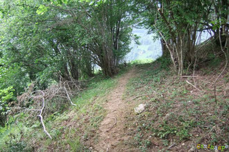 N°22/ Dans le bosquet entre les lacets de la piste de Chimits : partant d'une bonne intention, avec la coupe de branchages, le sous-bois risque d'être sali par des ronces au milieu de ces branches qui auraient pu être concentrées en un tas unique.