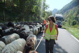 Serrer la laine au contact de la civilisation routière sur la N134-E7