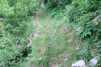 N°22/ Plus loin la qualité du fauchage se dégrade, le rotofil a dû survoler les hautes herbes, épargnant au passage quelques fraises des bois, felix culpa !