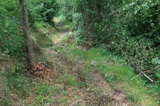 N°42/ Quelques repousses ligneuses ont été réduites sur le chemin remontant au Col de Rédo ; le reste de la végétation herbacée n'est pas rasé.