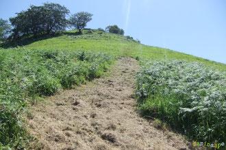 N°7/ Le Chemin du Col de Laünde grimpe vers Saudalate : la fougeraie du bas est bien dégagée.
