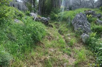 N°22/ Vers le haut du Bois de Chimits, herbes dopées à l'air de la Montagne, ou fauchage très approximatif, Mystère !