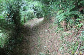 N°3/ Un peu plus bas à Bosdapous à l'approche du Calvaire : le chemin est bien fauché en bordure amont