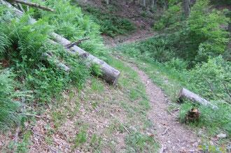 N°22/ Le Chablis du Berger : chaque année, ce tronc de hêtre bien lisse glisse un peu plus bas sur le Chemin d'Ilhurté et a droit de se faire découper une rondelle de plus !