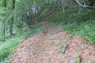 N°25/ Les clairières des Ichantes sont bien fauchées, ici vers le haut !