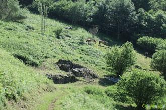 N°41/ Halte le long du Chemin Panoramique  : le tour de l'ancienne cabane rasé de près, les chevaux vont pouvoir se régaler d'herbe fine !