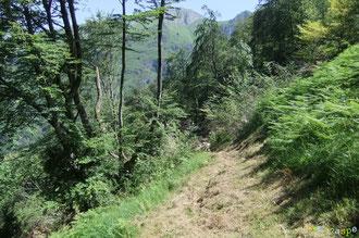 N°7/ Au-dessus du Tos (abreuvoir) de la Coustette, le chemin parfaitement fauché file à travers le bois martyrisé par la tempête. Il ménage quelques aperçus sur la montagne de Napatch.