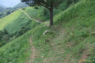 N°22/ Bis repetita, le passage véritable rattrapé sous le pin à la place du dévers à gauche