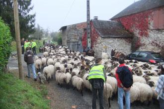 Ici, nous quittons le Chemin de Compostelle et le parcours habituel de transhumance pour rejoindre la route de Lasseube et la manifestation contre le projet de nouvelle route Pau-Oloron.